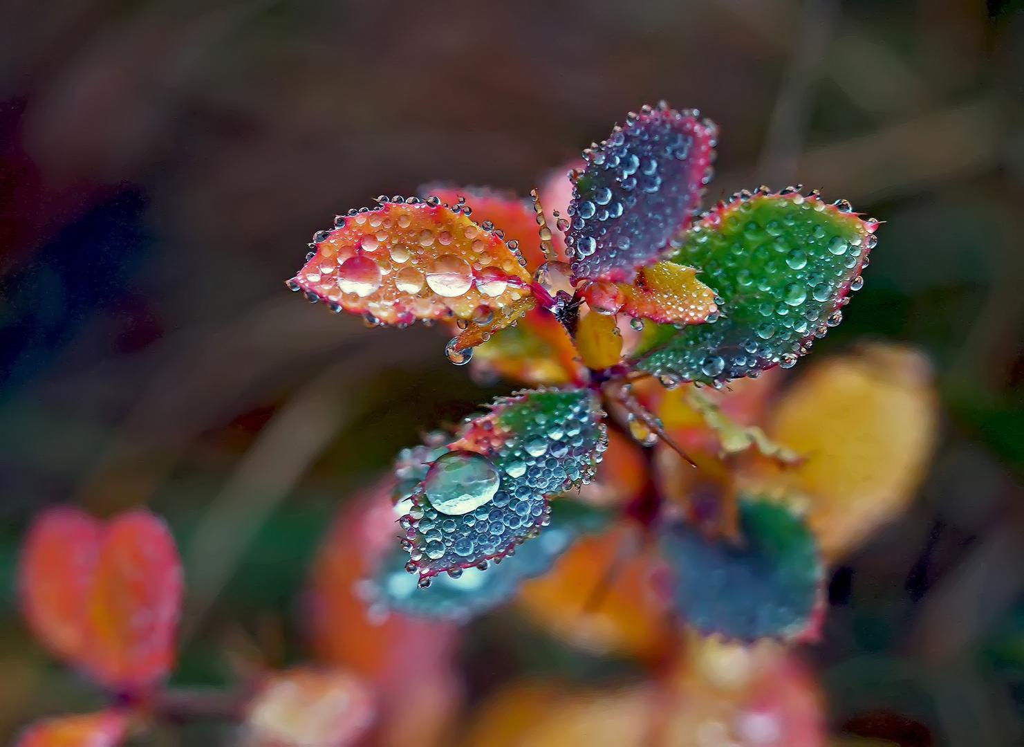 Dem Zauber der Natur sind keine Grenzen gesetzt! - Les merveilles de la nature n'ont pas de limite!