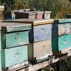 Demasiadas abejas juntas