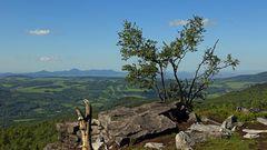 Den bekannten Berg Boren bei Bilina zwischen die Baumstämme genommen...