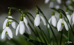 den Frühling einläuten