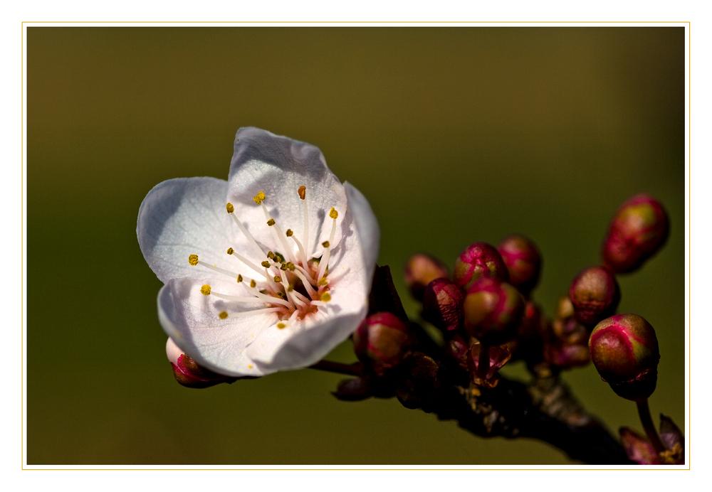 Den Frühling entdecken