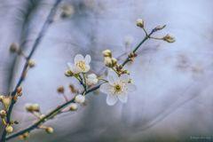 ... den Frühling gesucht ...
