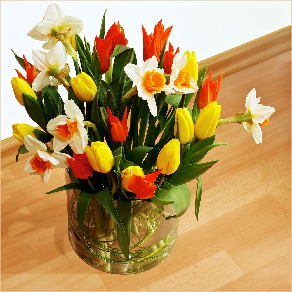 Den Frühling ins Haus geholt (2)