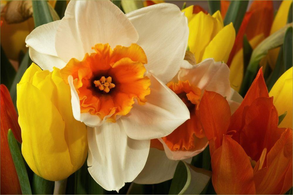 Den Frühling ins Haus geholt