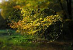 Den goldenen Herbst voll im Visier