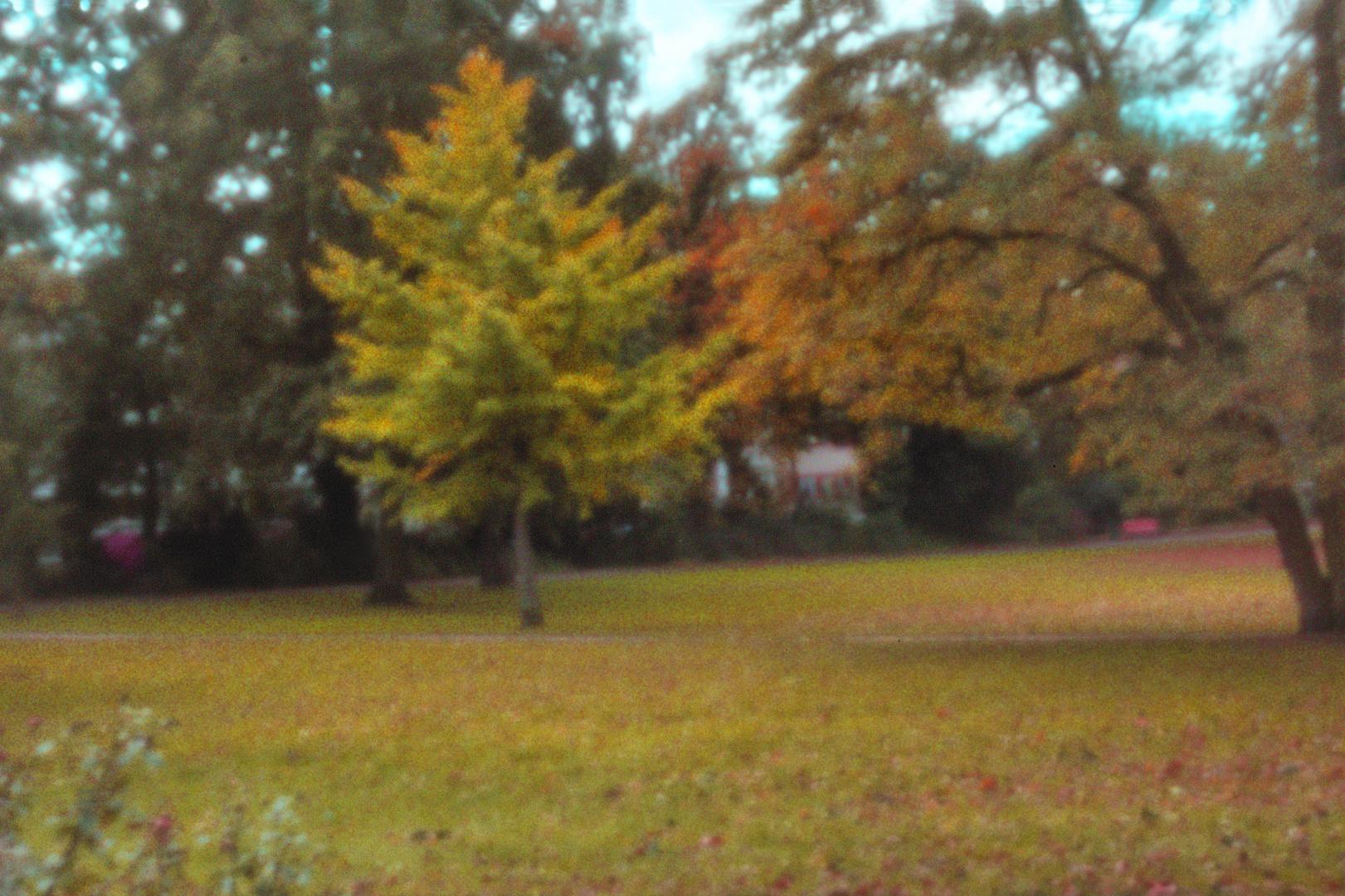 Den Herbst gelocht...