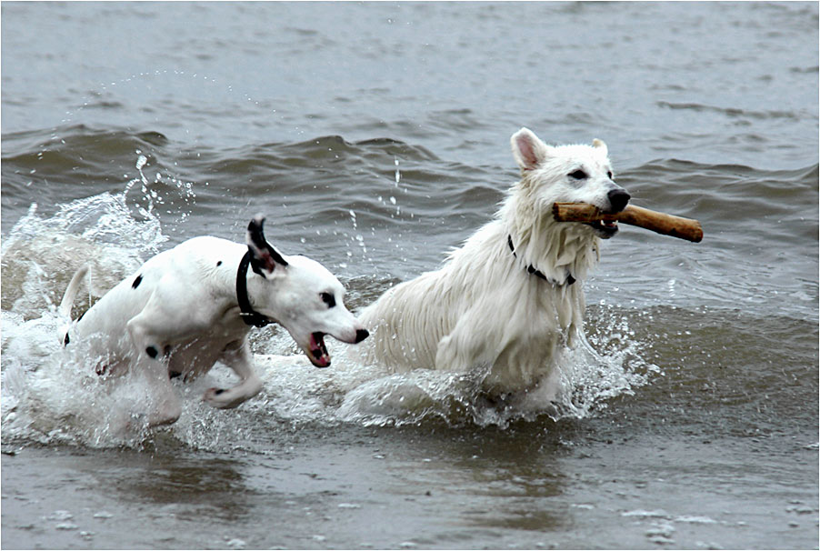 Den Hunden war das miese Wetter wurscht ...