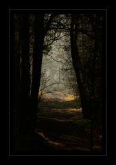 Den Klängen der Natur lauschen...