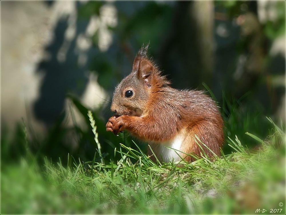 Den kleinen Waldkobold...