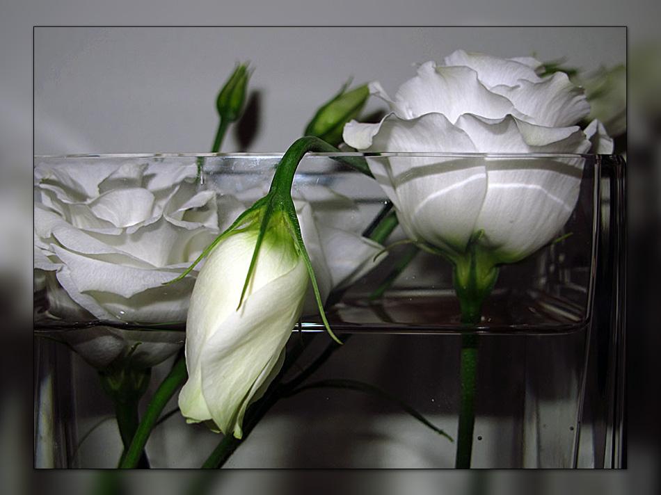 den kopf nicht h ngen lassen foto bild florales bilder auf fotocommunity. Black Bedroom Furniture Sets. Home Design Ideas