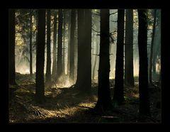 ...den Nebel vor lauter Bäumen (fast) nicht sehen... (mit DISKUSSION über Technik und Gefühl)