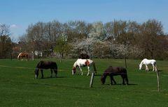 Den Pferden auf der Koppel ...