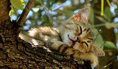 Den Schlaf der Gerechten schlafen...