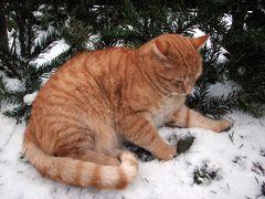 Den Schnee kennt Rocky schon. Er ist ihm nicht fremd, denn Rocky wird ja schon bald 4 Jahre alt.