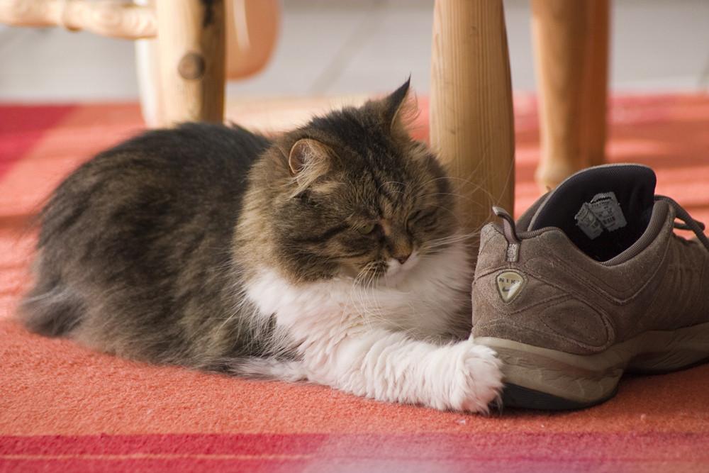 - Den Schuh zieh ich mir an - !!!
