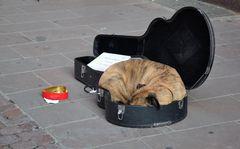 Den Seinen gibts der Herr im Schlaf