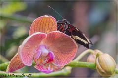 Den Sommer suchen im Schmetterlingshaus