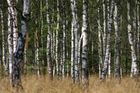 Den Wald vor Bäumen...