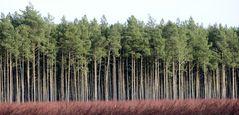 .....den Wald vor lauter Bäume..........