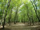 Den Wald vor lauter Bäumen...