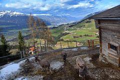 Den Wolken so nah in Tirol