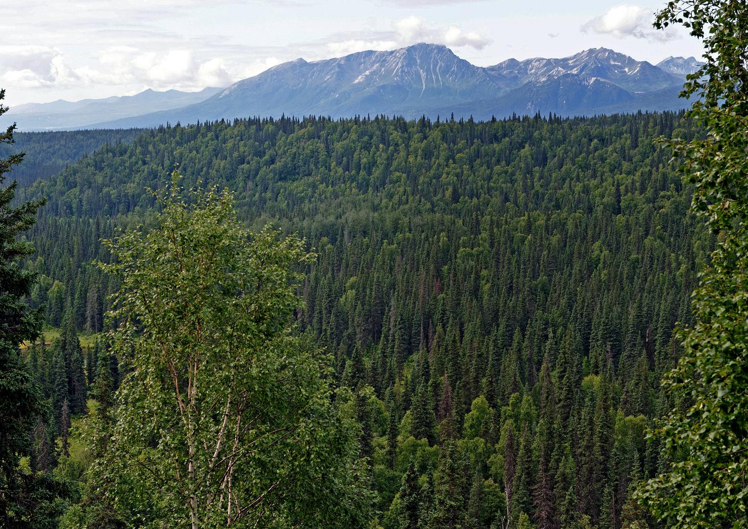 Denali State Park Ermine Hill Trail Alaska