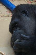 Denkender Gorilla