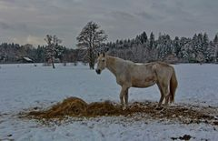 Denkt auch an die hungrigen Pferde im Winter.
