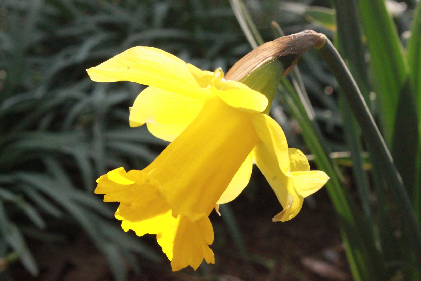 .. denn im Frühling blühen nicht nur die Blumen