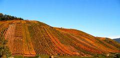 Denzlingen: Blick nordwärts auf den Buchholzer Weinberg in Herbstfarben