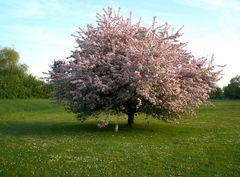 Denzlingen: Frühling im Stadtpark