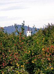 Denzlingen Georgskirchturm inmitten von Apfelbäumen