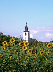 Denzlingen: Georgskirchturm inmitten von Sonnenblumen