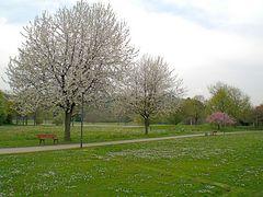 Denzlingen: Heimatweg im Frühling