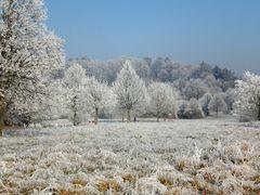 Denzlingen: Winter im Stadtpark 1