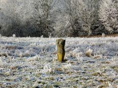 Denzlingen: Winter im Stadtpark 2