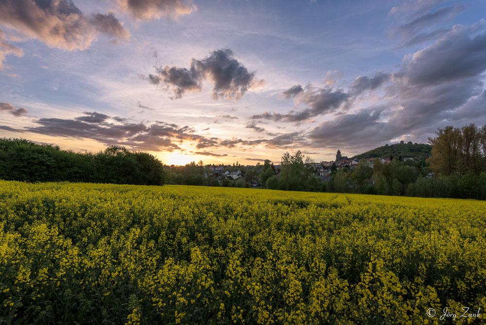 Der abendliche Blick über das Rapsfeld