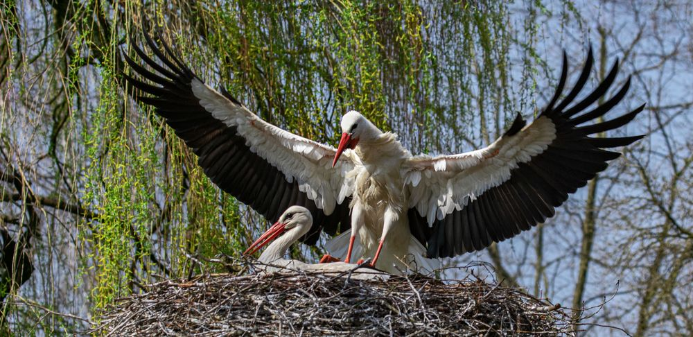 der adler ist gelandet 001 foto  bild  tiere wildlife