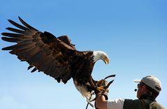 Der Adler ist gelandet!