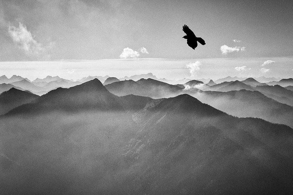 *** der Alpencondor vom Wendelstein ***