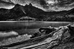 Der Alpsee in S/W
