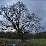 Der alte Baum ...