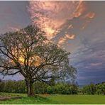 Der alte Baum .