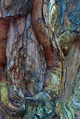 Der alte Baum am See ...