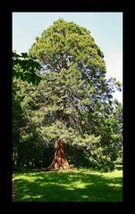 Der alte Baum!