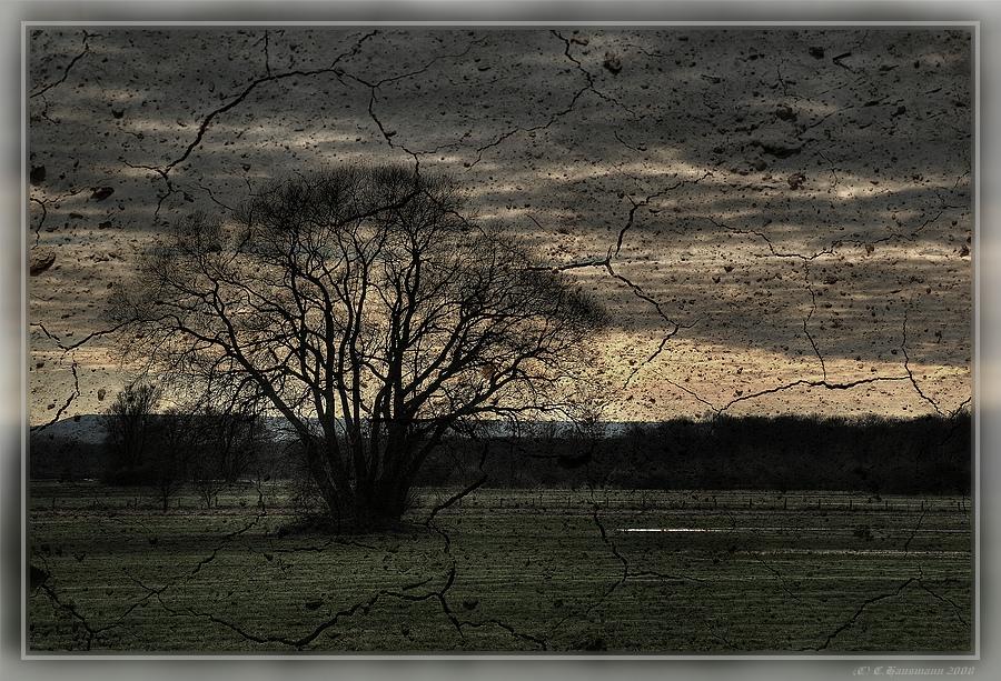 Der alte Baum II