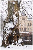 Der alte Baum und das Schloss