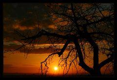 Der alte Baum und die Sonne