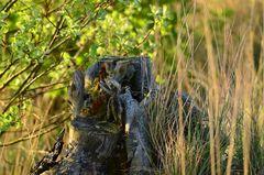 Der alte Baumstumpf