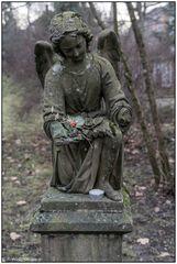 Der alte Friedhof in Freiburg 12